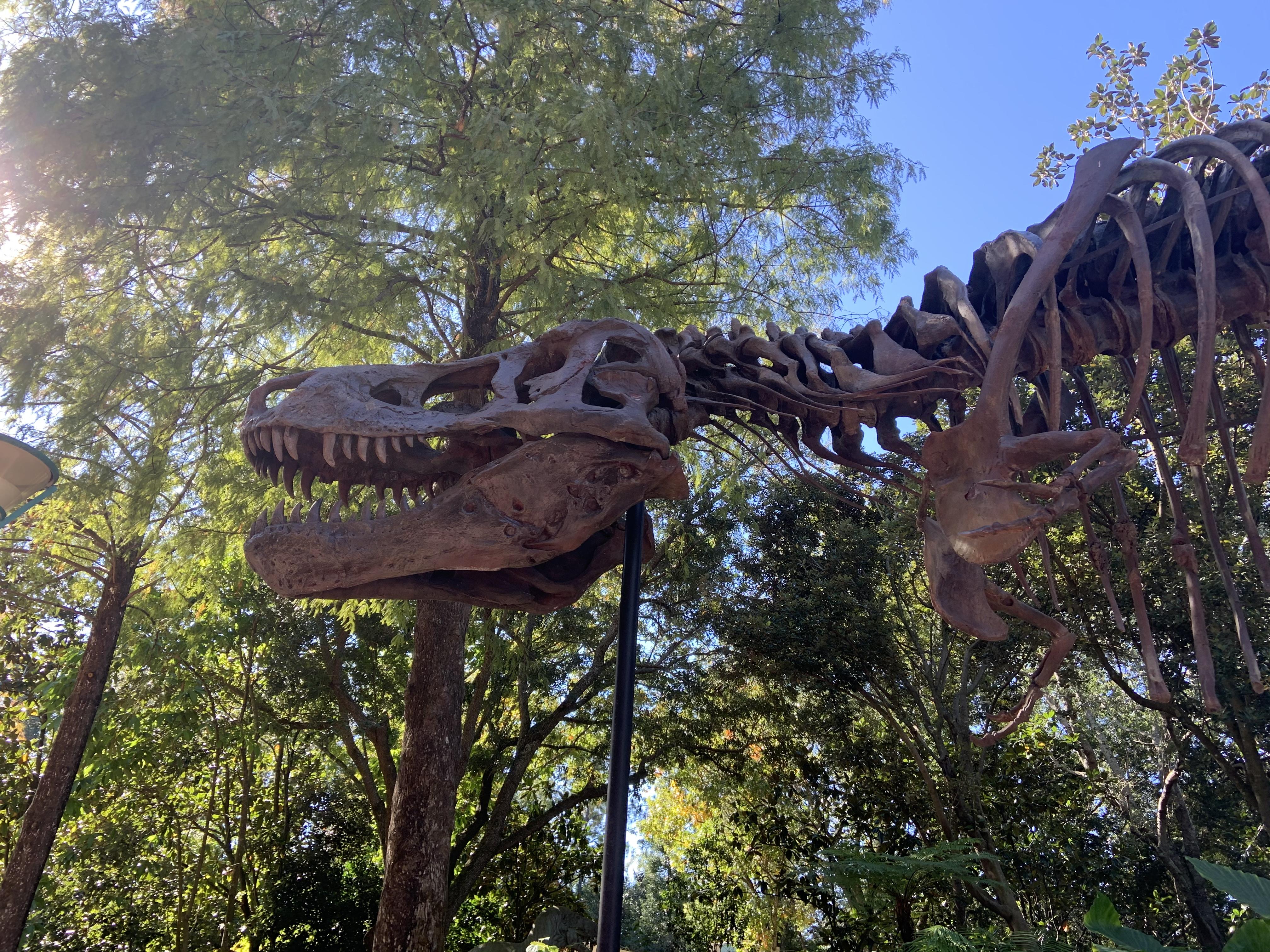 Dino in Dinoland 12/7/19