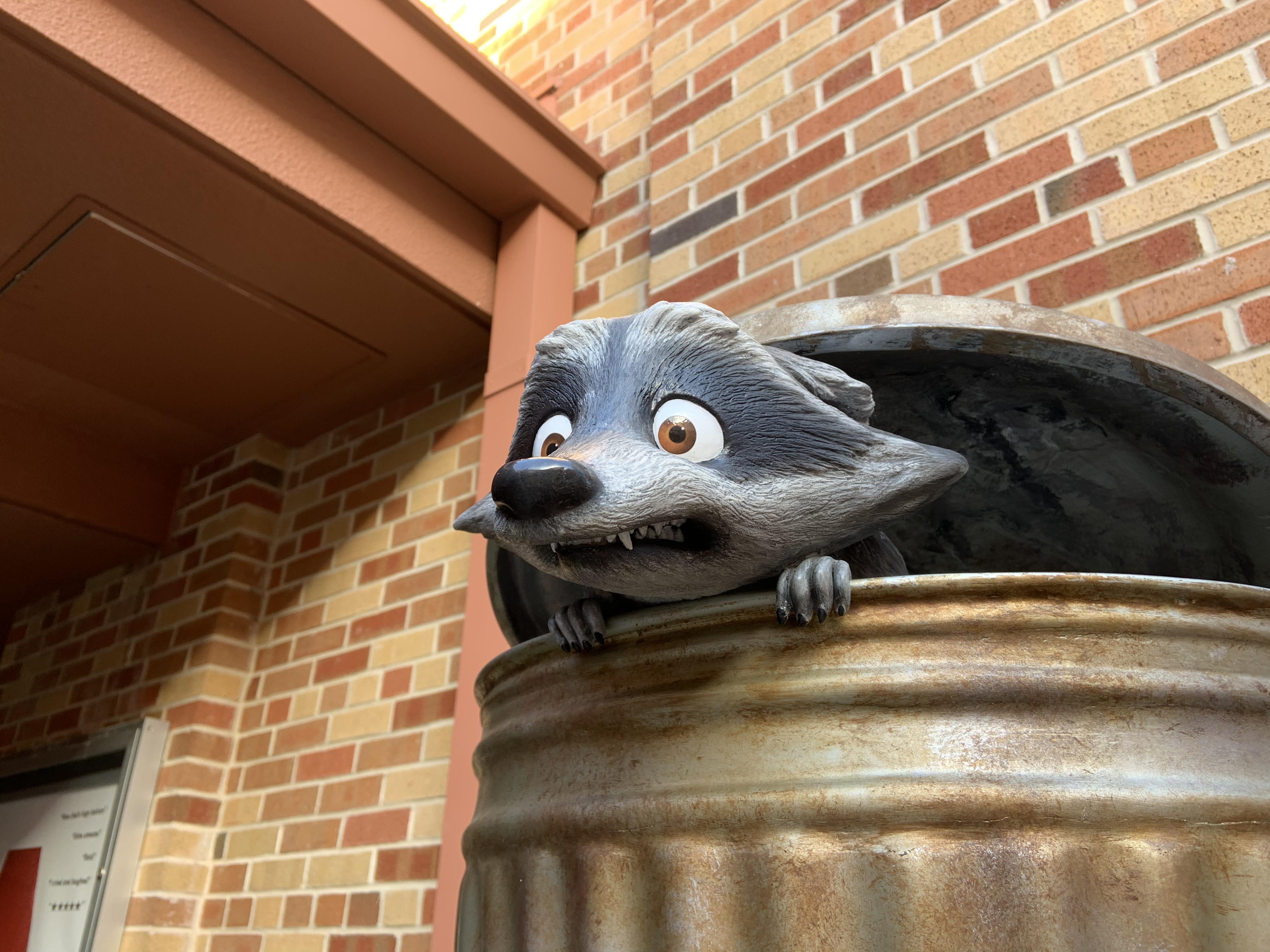 Raccoon 1/18/20