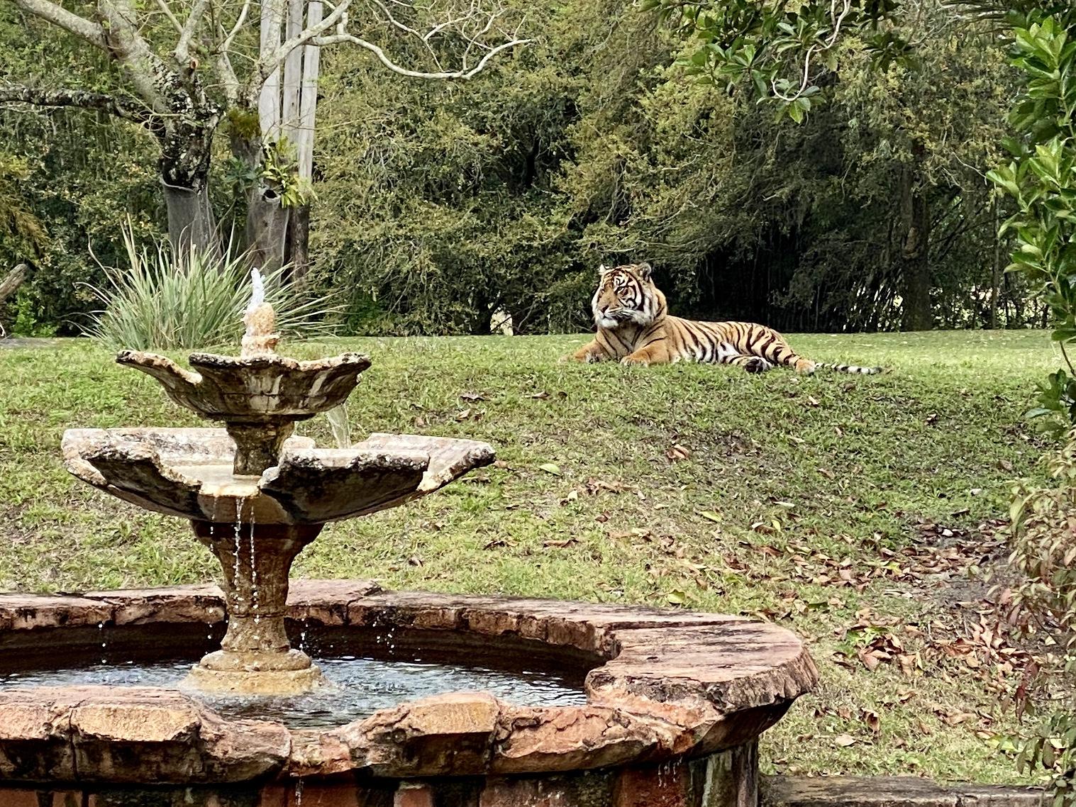Jungle trek tiger