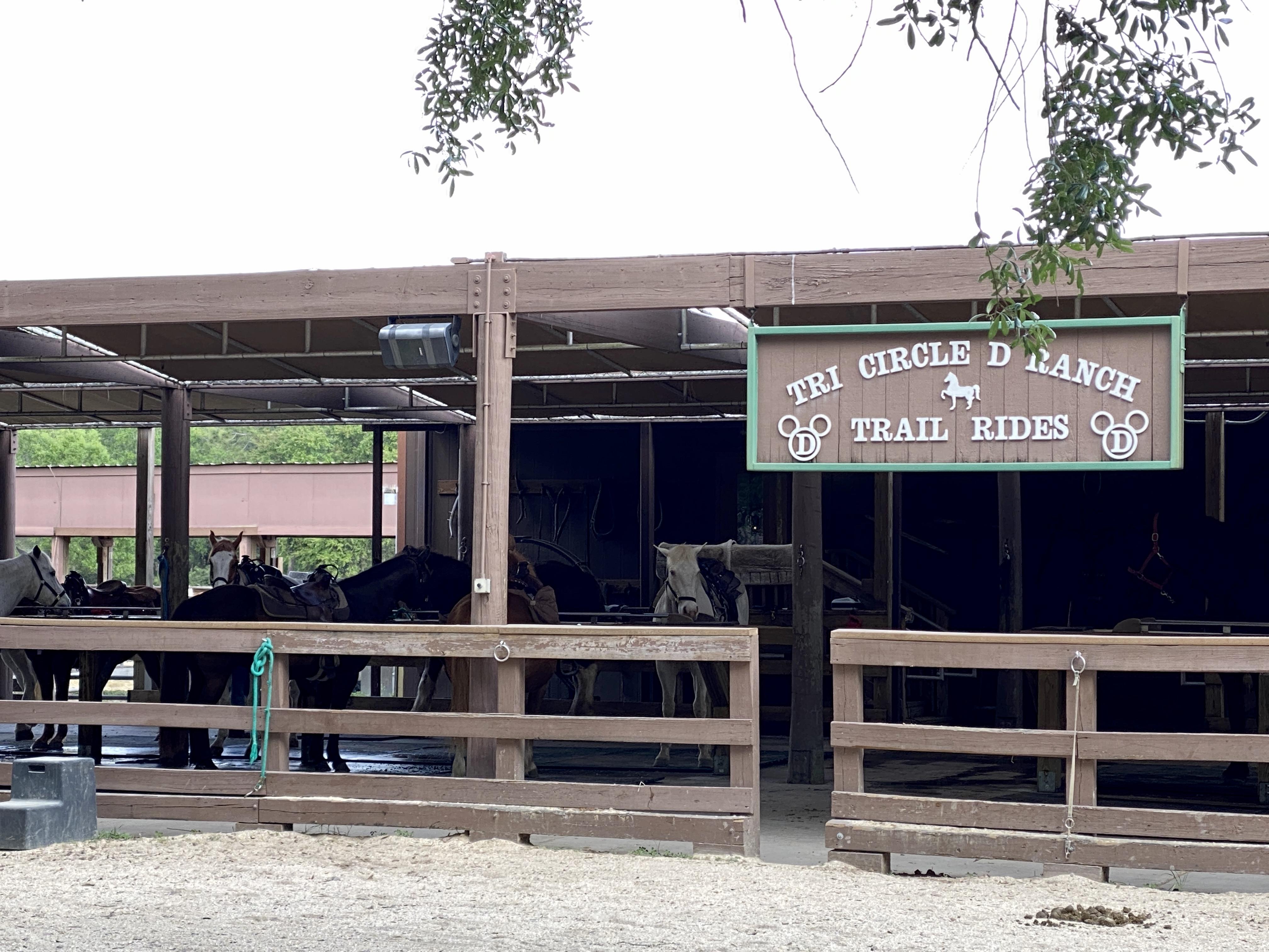 Tri cirlce d ranch trail rides